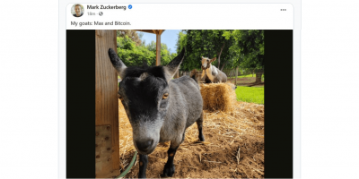 Les chèvres de Mark Zucherberg