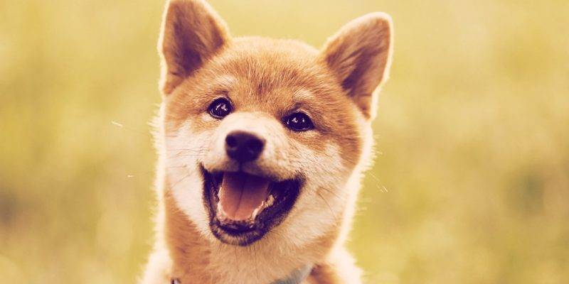 Baby Dogecoin signe son grand retour! Il rejoint le top 200